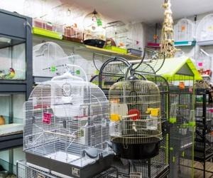 pájaros, jaulas y todo tipo de accesorios, en Paterna Valencia