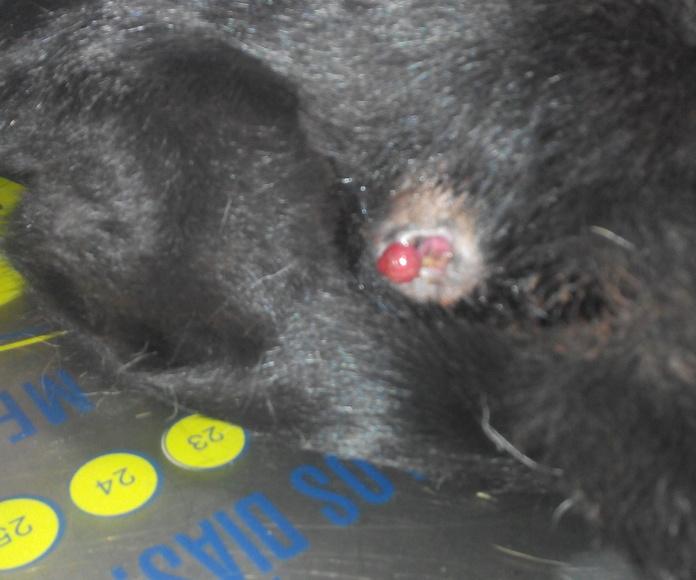A Selenca le asomaba un tumor intestinal por el ano.  Ya ha sido extirpado y ya puede hacer vida normal.