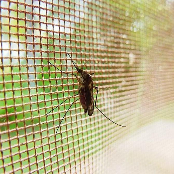 ¿Qué producen las picaduras de los mosquitos?