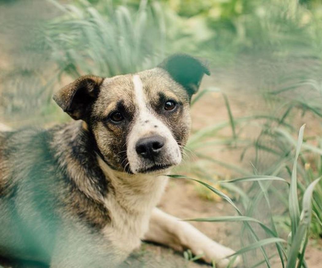 Los principales síntomas de la leishmaniasis canina