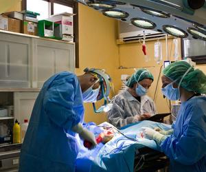 Todos los productos y servicios de Veterinarios: Hospital Veterinario Desvern