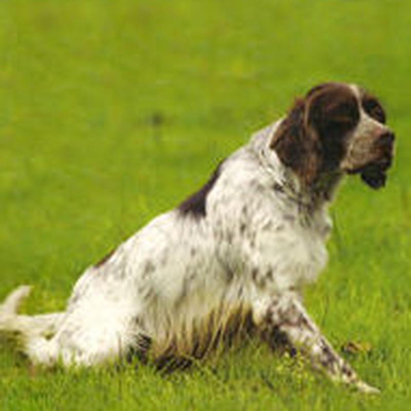 Especial cazadores: Servicios de Errekagane Residencia Canina