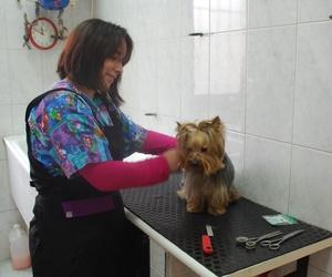 Peluquería canina  Mostoles http://www.veterinariosmostoles.com/es/