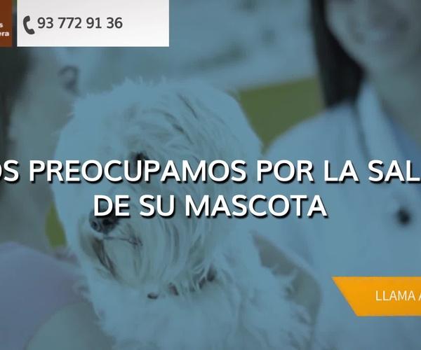Veterinarios en Esparreguera | Serveis Veterinaris Esparreguera