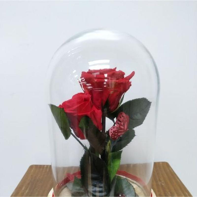 Flor preservada: Catálogo de Flores Maranta