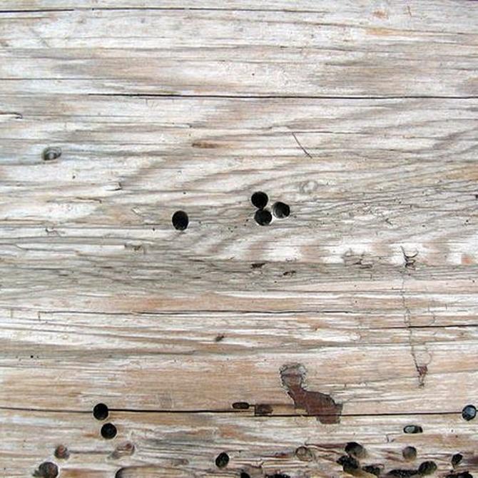 Las enfermedades de la madera