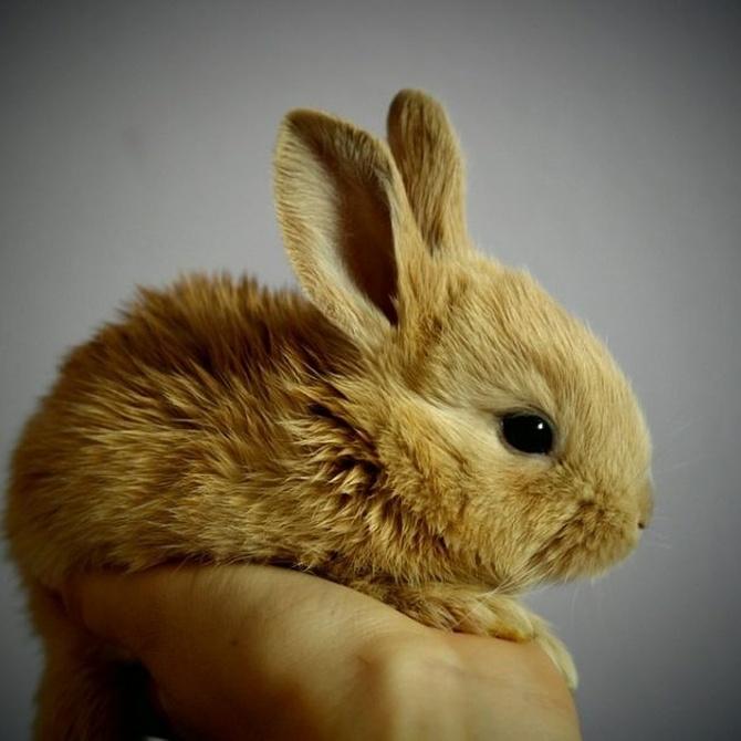 Trucos de chistera para cuidar a un conejo