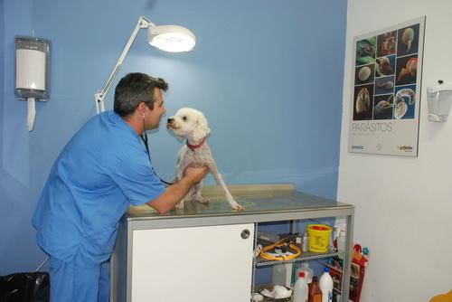 Javier, director de San Antón con un paciente