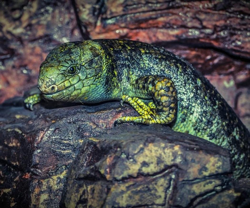 El cuidado de los lagartos