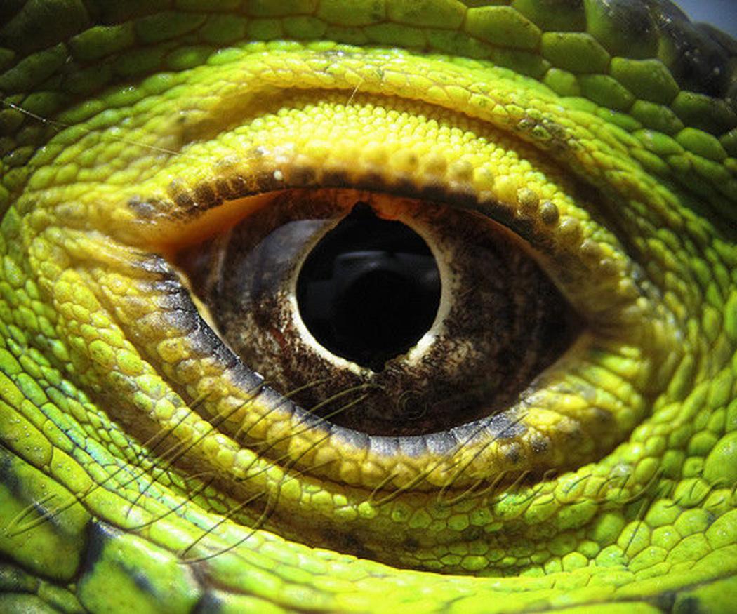 Consejos para el cuidado de reptiles domésticos