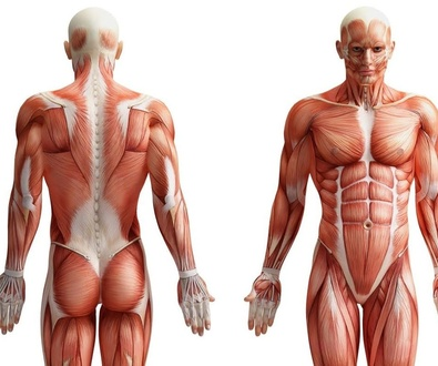 Causas que perpetúan el dolor múscular