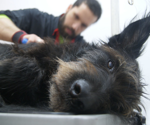Estética canina Sants