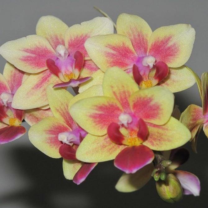 Flores ideales para esta primavera