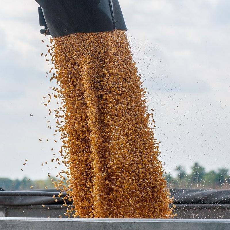 Control de alimentos para ganado: Servicios de Ainprot, S.A.