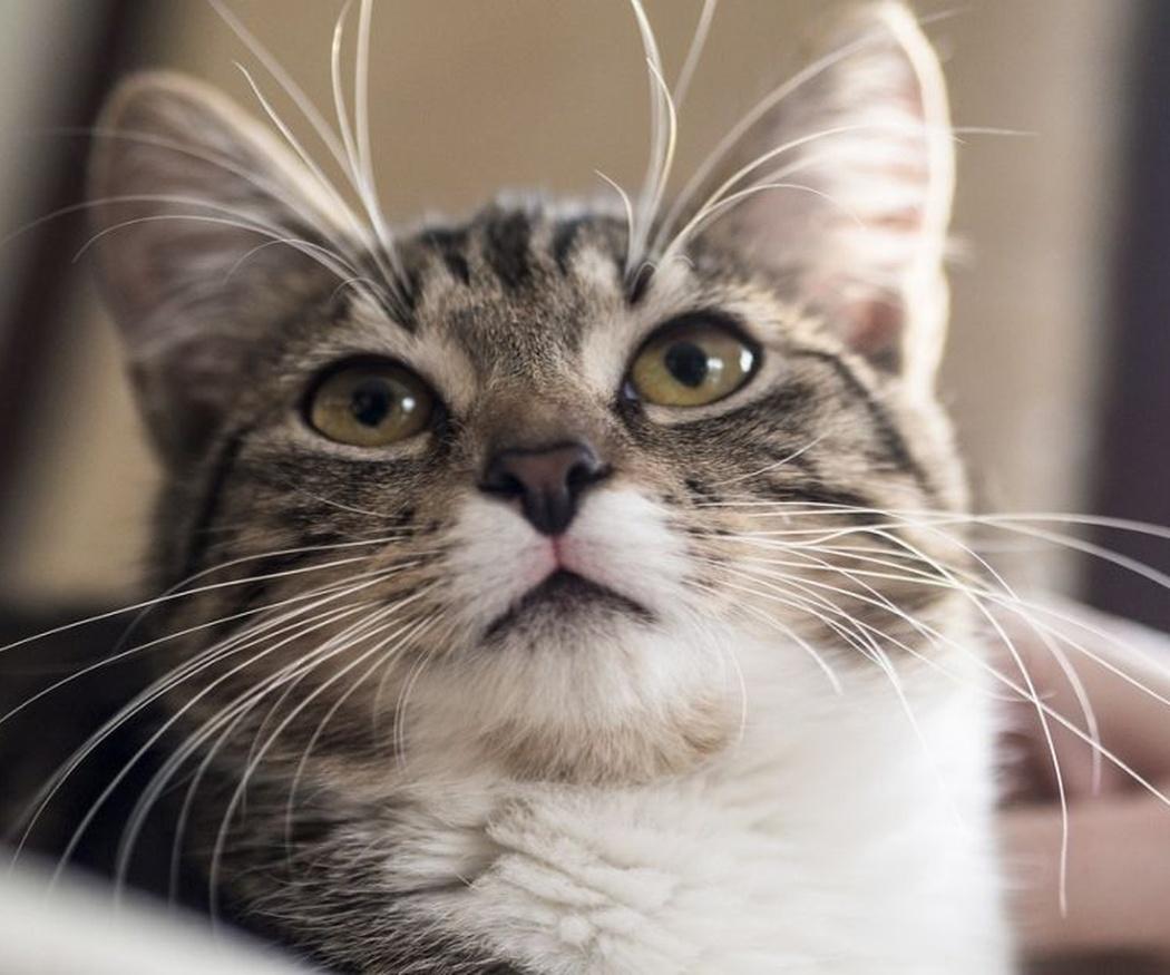 La malta para gatos