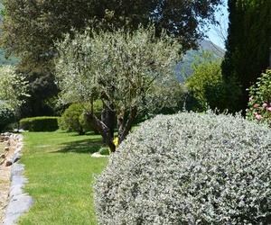 Poda de jardines en Girona