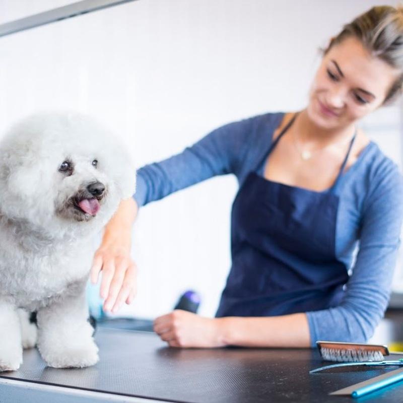 Peluquería y Estética Canina: Cursos de CEMAFE Formación