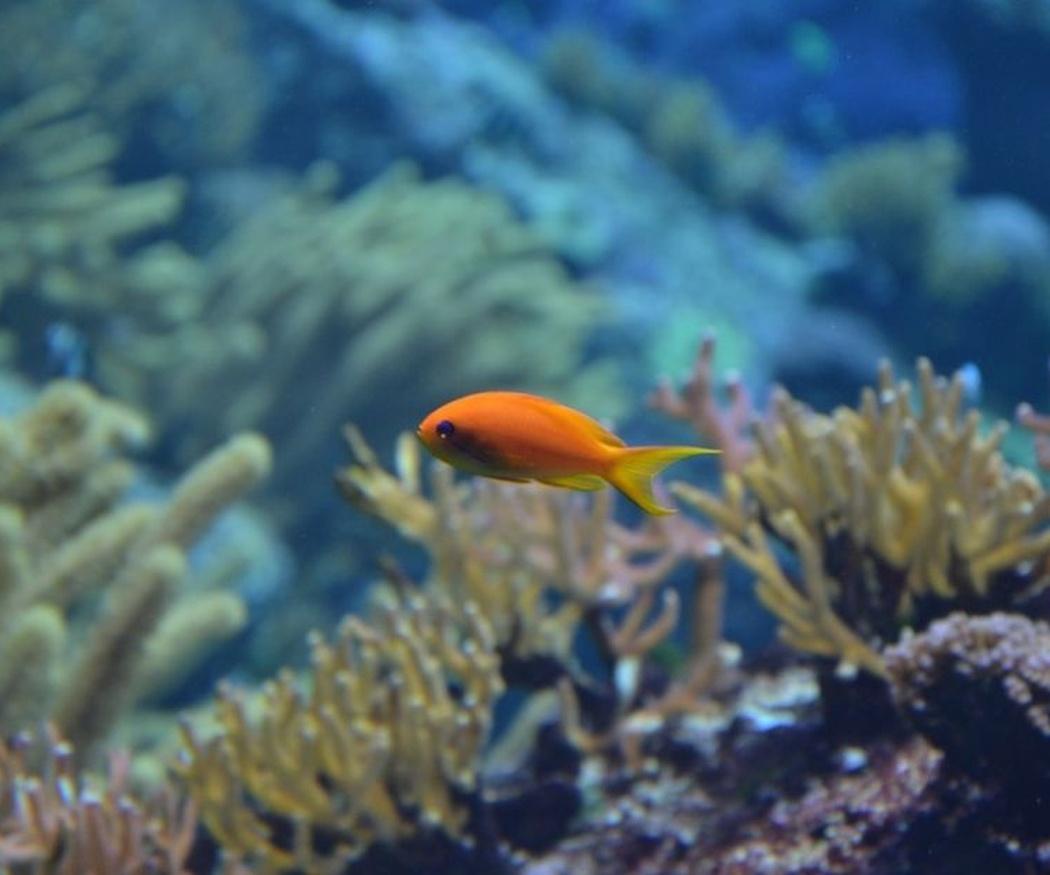 Los peces más apropiados para un acuario (I)