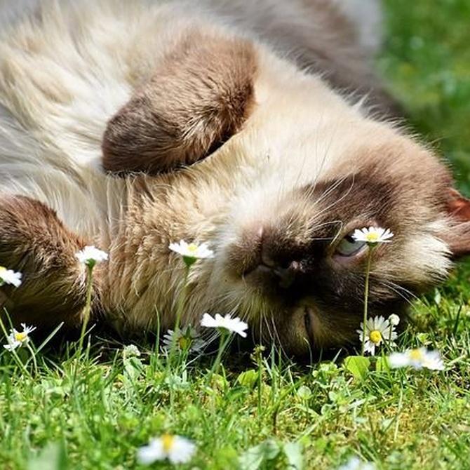 ¿Cómo tratar la ansiedad en los gatos?