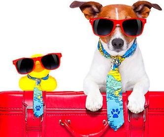 Peluquería canina: Servicios de Compañeros Tienda De Mascotas