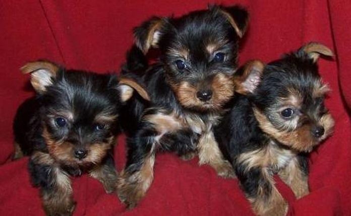 Comprar cachorros Vitoria