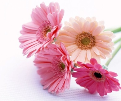 Diez consejos para disfrutar más tiempo de tus flores