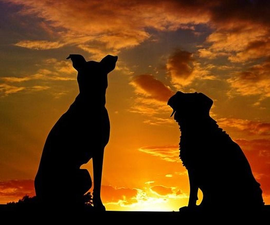 5 cuidados imprescindibles para tu perro