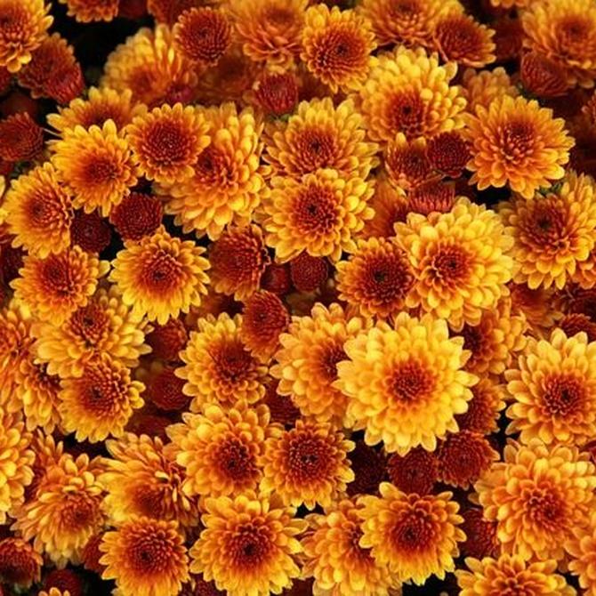 ¿Cuáles son las flores más adecuadas para el otoño?