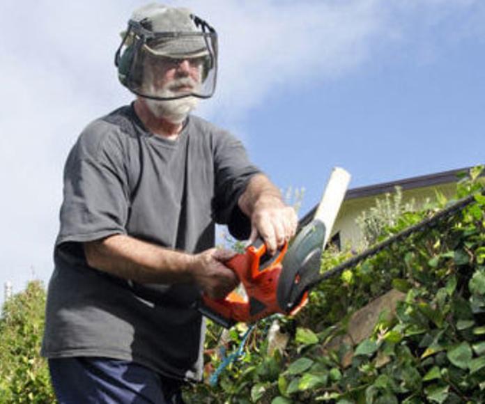 Podas : Trabajos de Panda Jardín