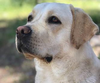 Material para peluquería canina: Servicios de Nueva Enseñanza Escuela Canina