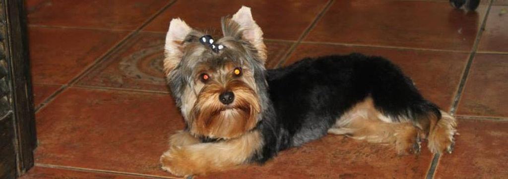 Peluqueria Canina Lugo /  Peluquería canina Pets-R-Us