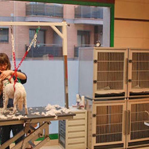 Peluqueria canina en Berga