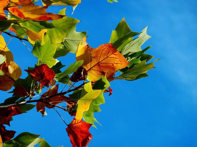 Algunas claves para el cuidado del jardín en otoño