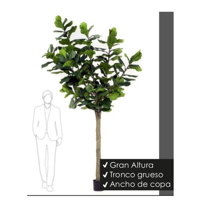 Árbol Ficus Lyrata Alto: ¿Qué hacemos? de Ches Pa, S.L.