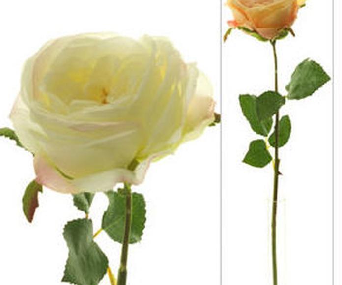 Rosa M Mozart Seda