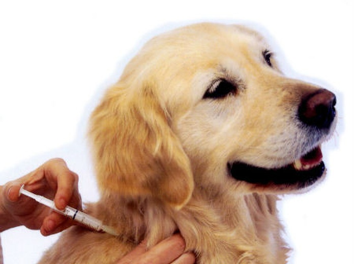 Atención especial: Servicios de Clínica Veterinaria 9 d'Octubre