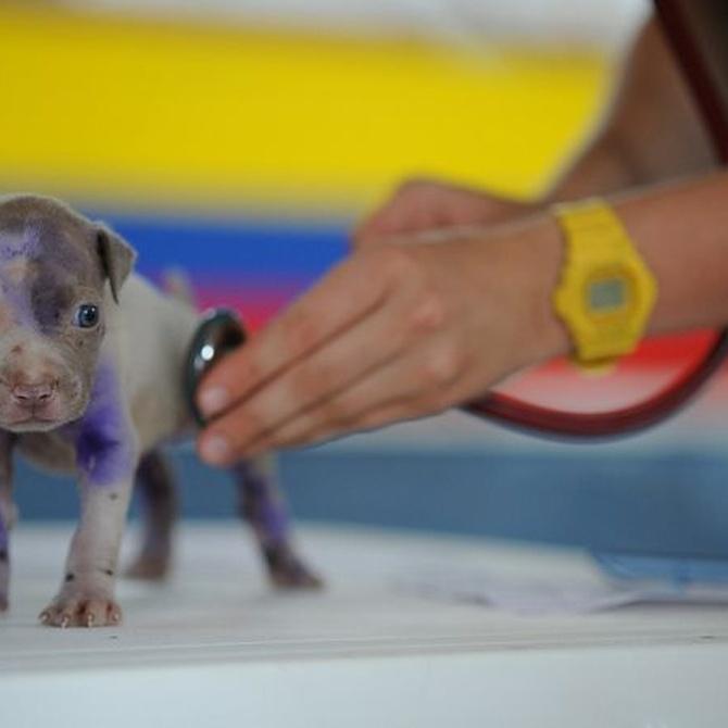 El diagnóstico en la consulta veterinaria