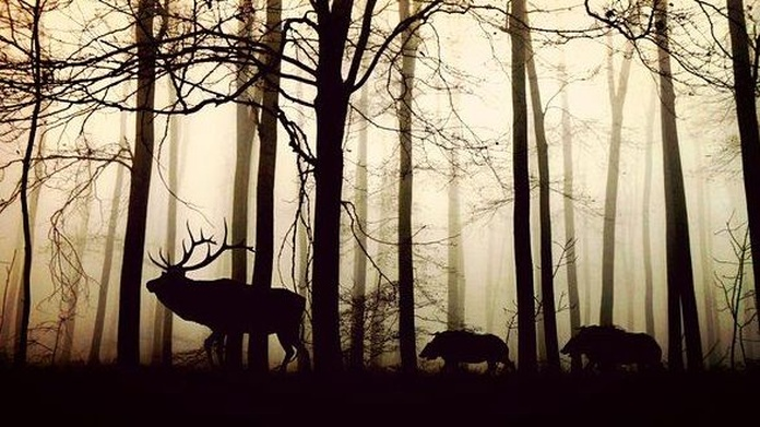 Gestión cinegética y forestal : Servicios de Agroambiental Bullaque