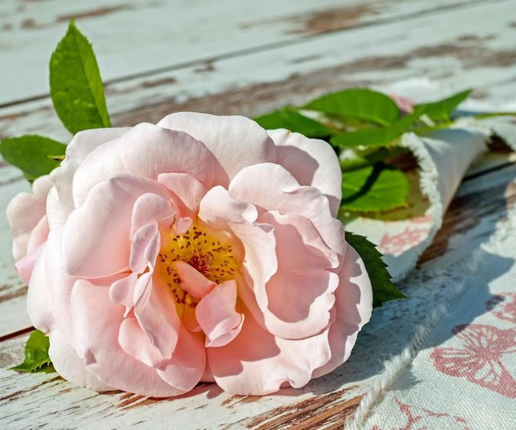 Descubre el significado de las flores (I)