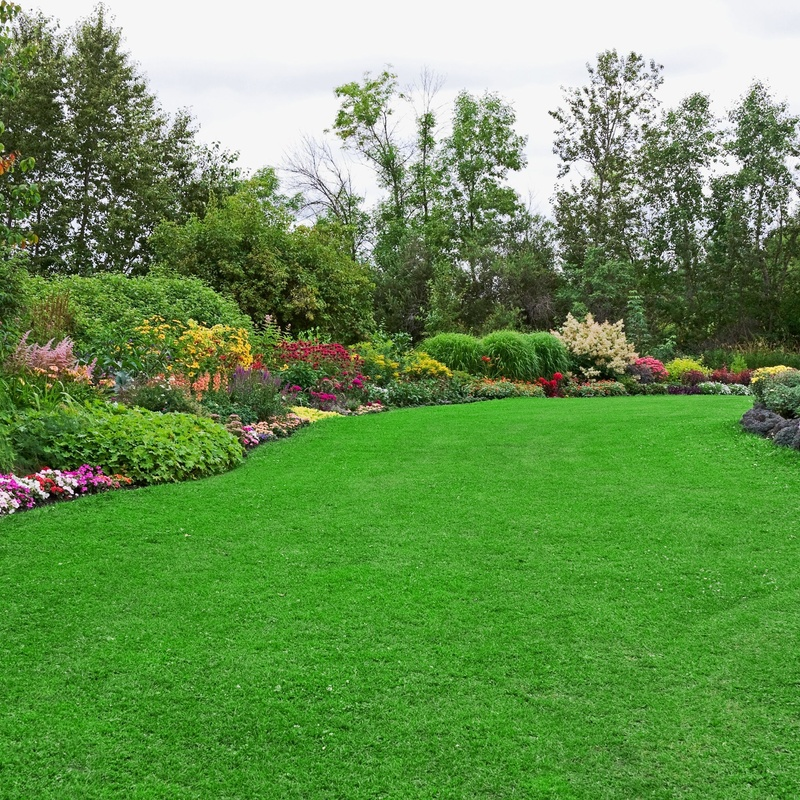 Jardinería: Servicios de International Global Control
