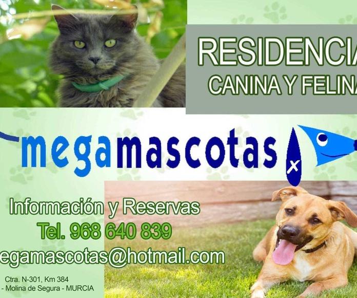 Residencia canina y felina en Murcia