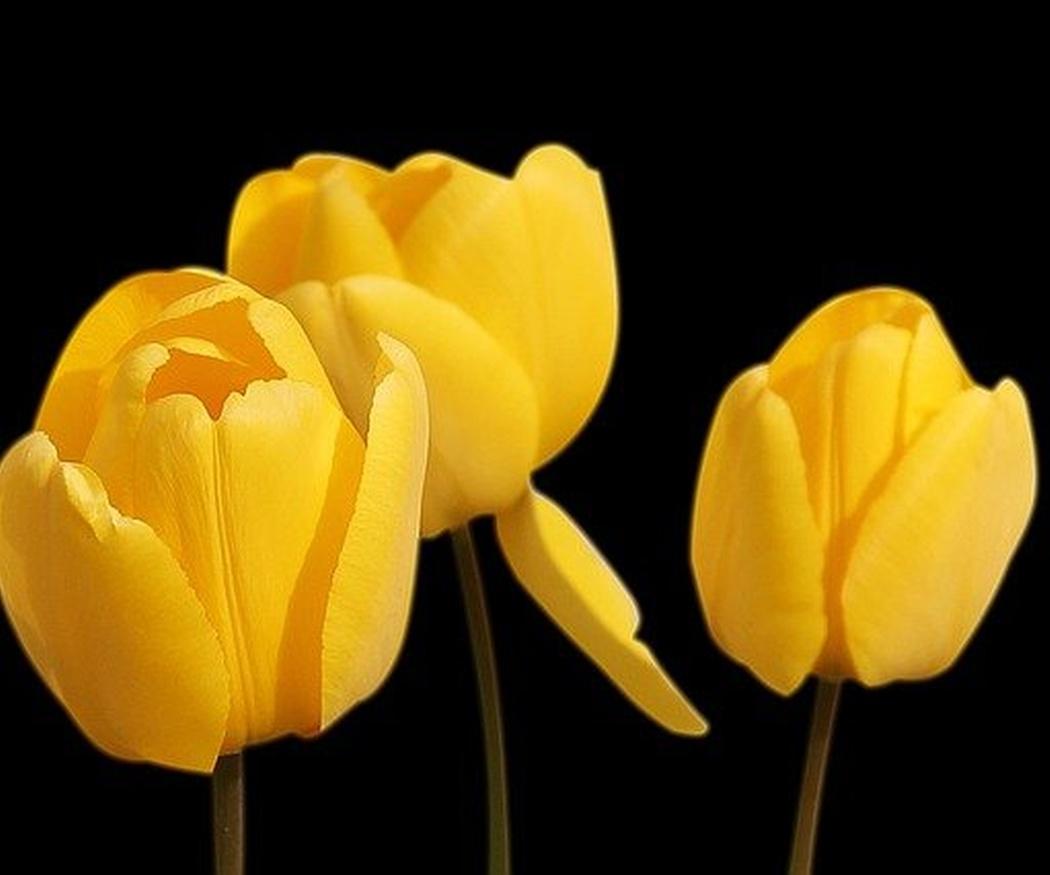Plantas con flores adecuadas para los ramos