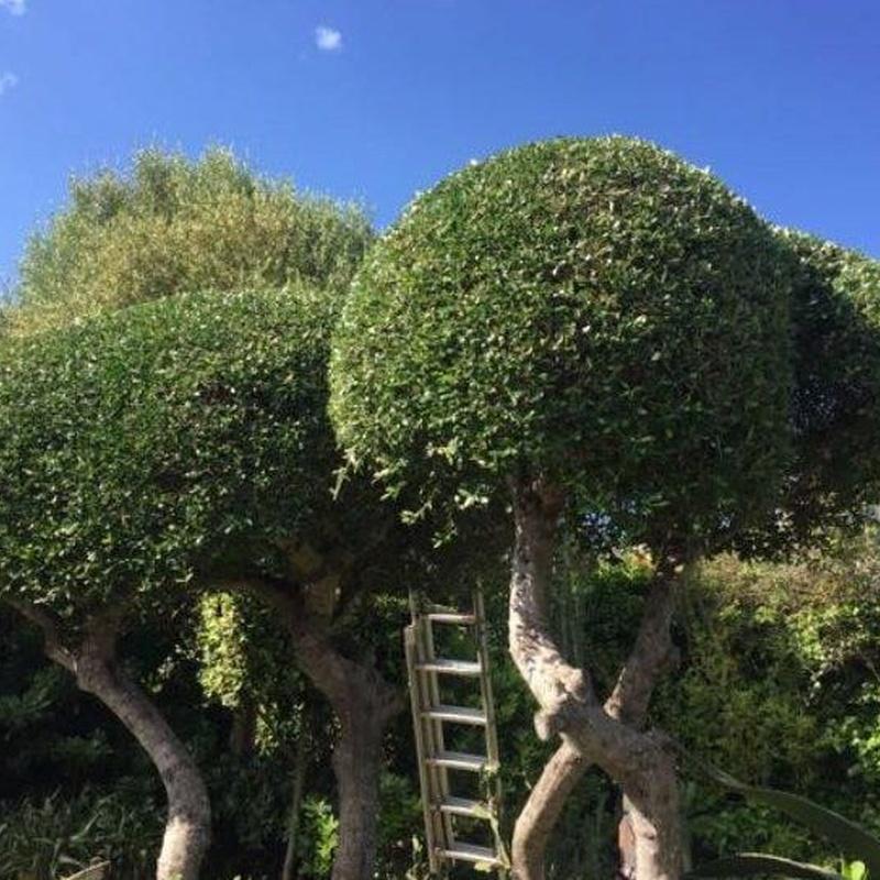 Diseño y mantenimiento de jardines: Servicios de Jardines Jasa