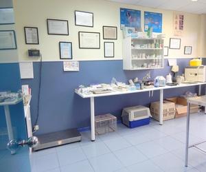 Consulta Clínica Veterinaria el Parque en Collado Villalba