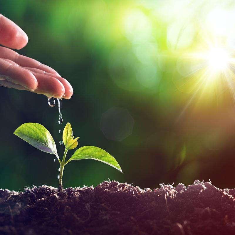 Nutrición vegetal: Servicios de AGROManchuela