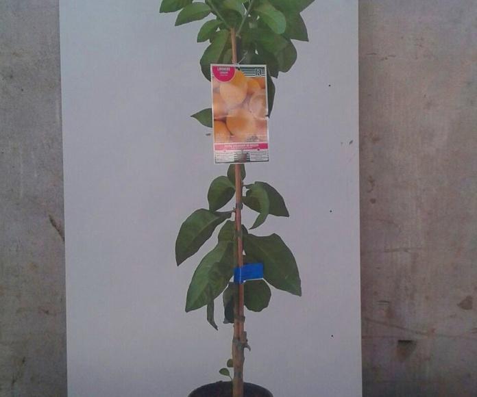 Venta de árboles frutales en Bizkaia