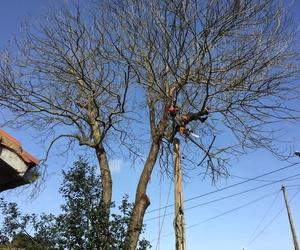 Talas de árboles en Gijón - Asturias