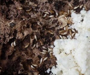 Tratamientos para insectos xilófagos en Oviedo