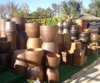 Trepadoras: Plantas y complementos de Viveros Cidoncha