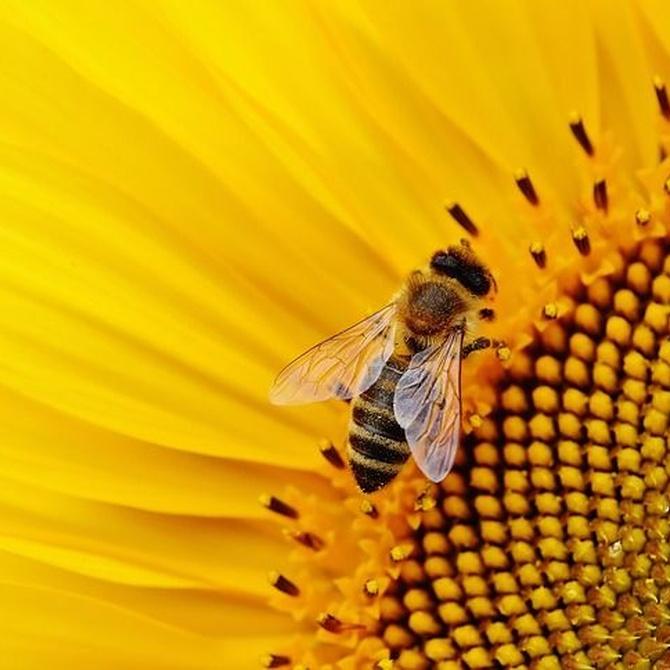 Beneficios para la salud del polen de abeja